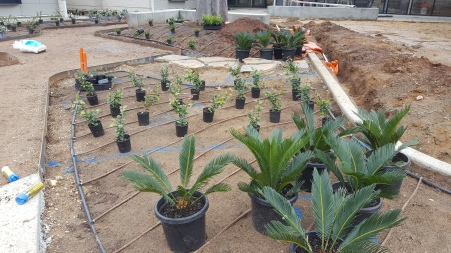 Irrigation laid down.