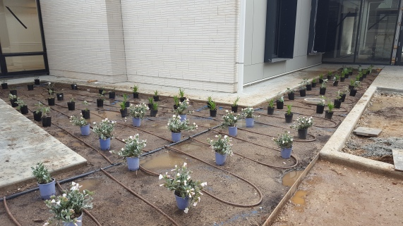 Various plants ready for planting.